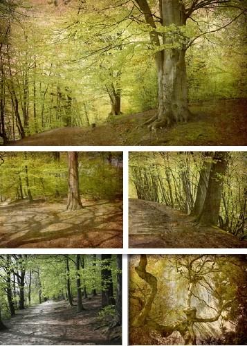 Clip Art - Magic forest