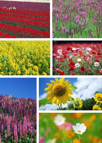 Clip Art - Wildflowers. part 2