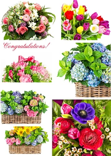 Congratulatory bouquets of flowers - clipart
