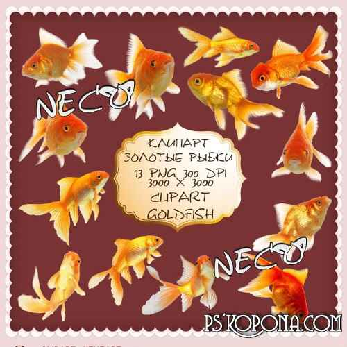 Clipart goldfish PNG