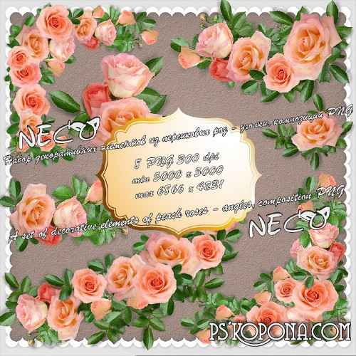 A set of decorative elements of peach roses - angles, composition PNG