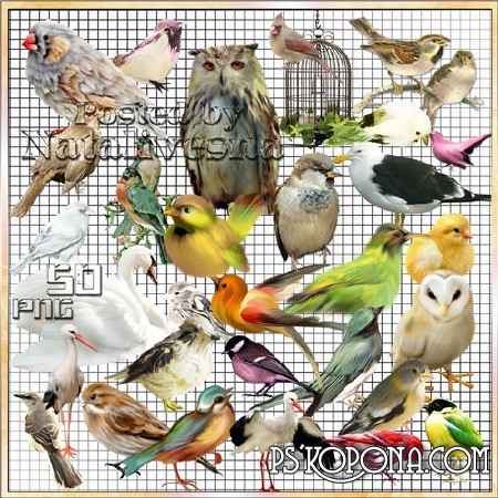 Clipart- Multi-colored birdies - nevelichka 2