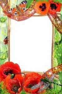 Framework Poppies in dew