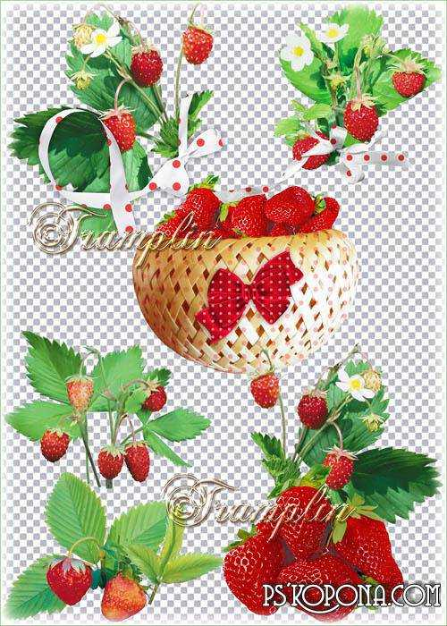 Clipart on a transparent background - Strawberries - ripe and fragrant