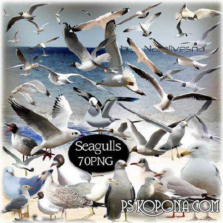 Clipart in PNG - Seagulls over the sea soar...