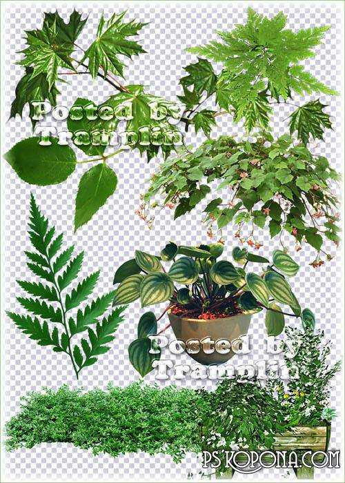 Green leaves, twigs, flowers in pots - Clipart on a transparent background in Png