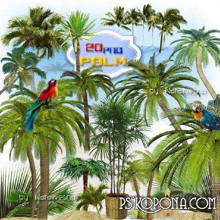 Clipart in PNG - Date, coconut palm trees...