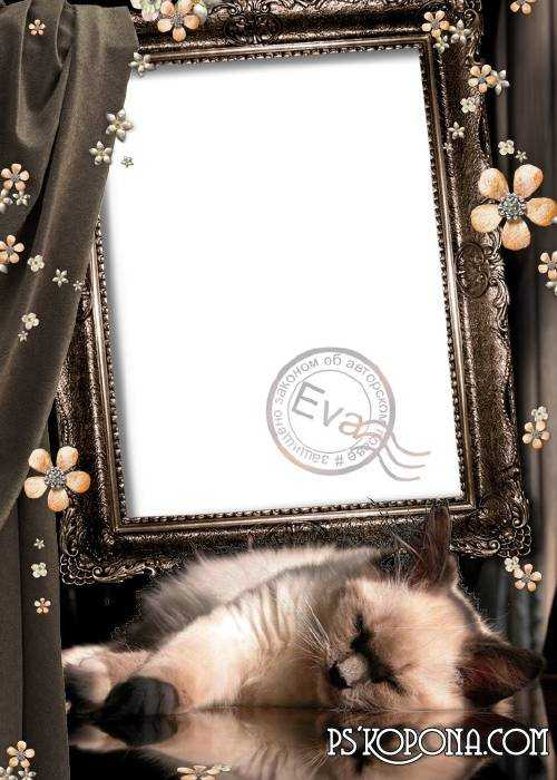 Photo frame png - The Kitty ( free photo frame png, free download )