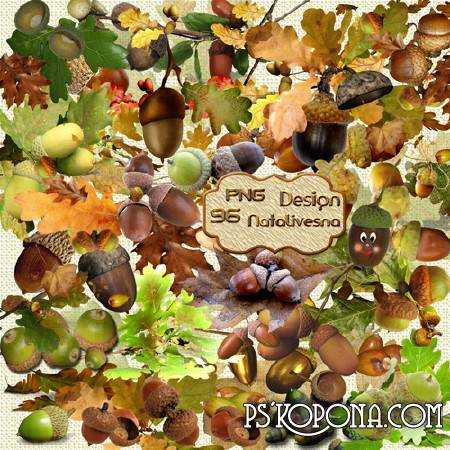 Clipart in PNG - Acorns and oak leaves