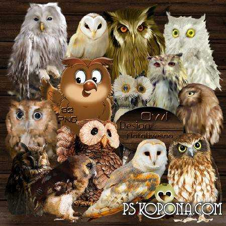 Clipart in PNG - Owls - Fantastic birds...