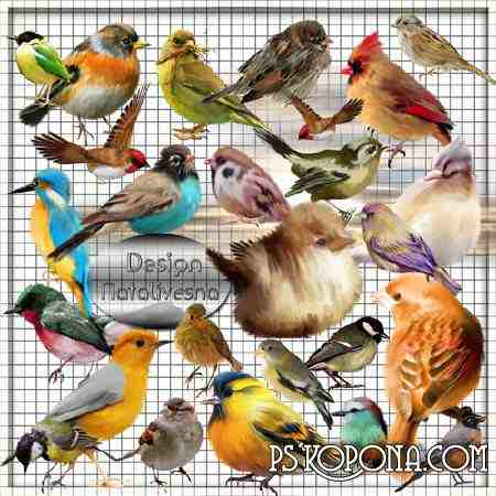 Clipart in PNG - Multi-colored birdies ...