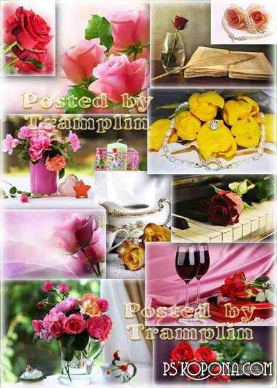 Roses – Beautiful flower backgrounds