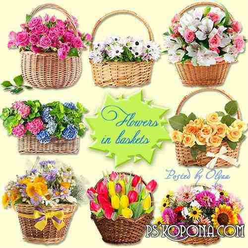 Klipart PNG on a transparent background – Flowers in baskets