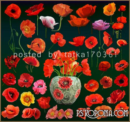 Floral clipart for Photoshop - Bright red poppies