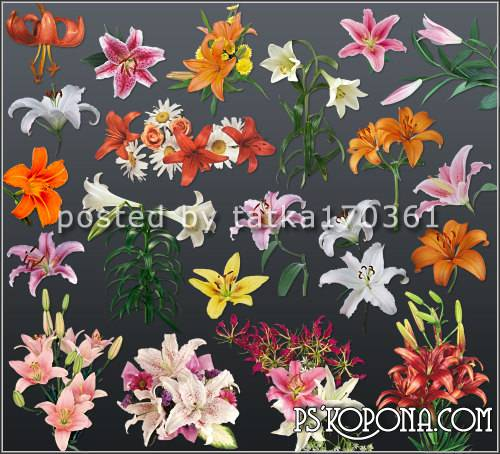 Flower clipart for Photoshop - Lilies garden