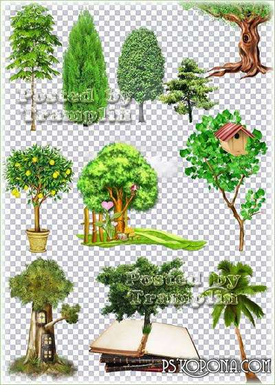 Clipart - Trees and shrubs on a transparent background