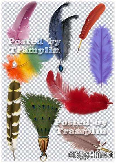 Clipart in Png - Multi-colored feathers