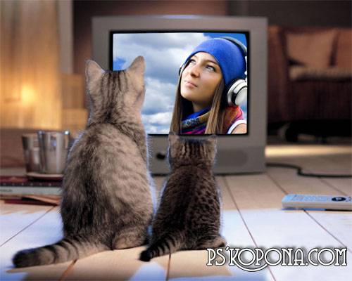 Frame for a photoshop - Cats at the TV