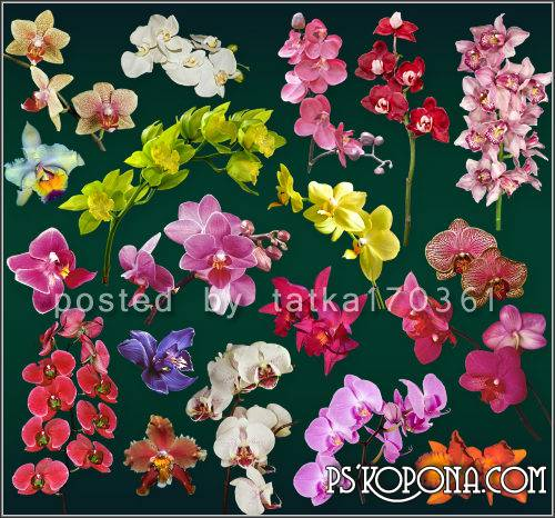 Floral clipart for Photoshop - Colorful orchids png