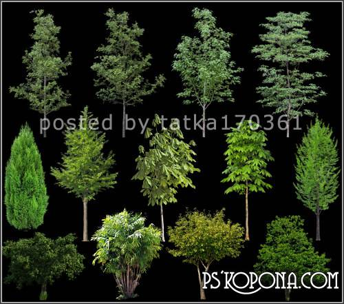 Clipart for Photoshop - Green trees and shrubs