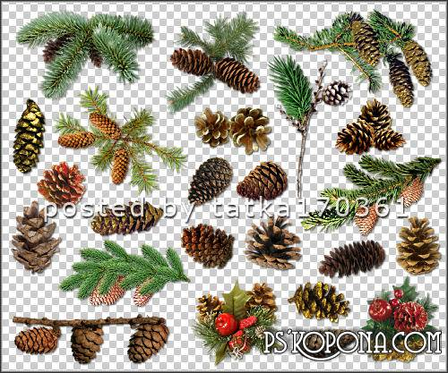 Clipart for Photoshop - Spruce and pine cones