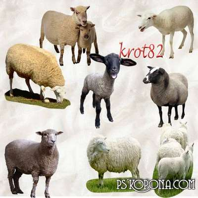 Graphics pets on a transparent background - Sheep, goats, sheep, lambs