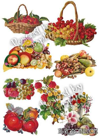 Berries png and fruit png images a transparent background - Free download