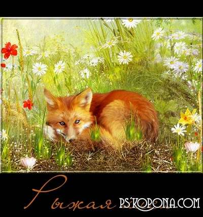 Red fox - PNG Free Files