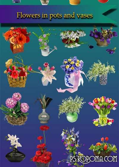 Flowers in pots and vases psd download