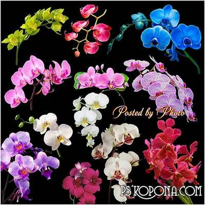 Beautiful orchids on a transparent background free png images