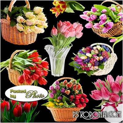 The most beautiful tulips png on a transparent background Free download
