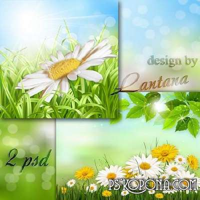 Multilayer backgrounds psd - Daisies - gentle creatures, full of love and charm