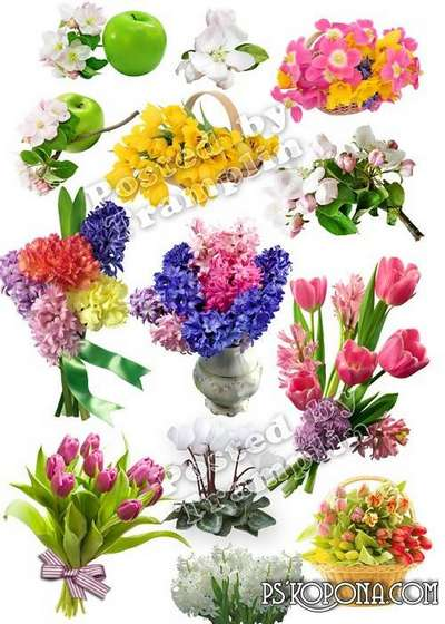 Spring flowers png images - Clipart on a transparent background