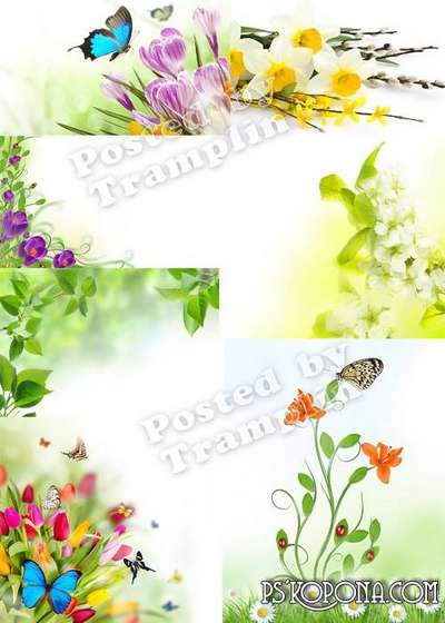 Spring flower backgrounds of Set 1