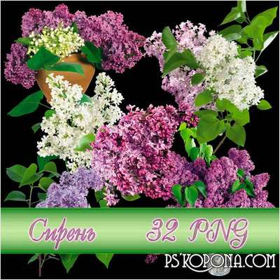 Lilac png images, clipart png on a transparent background - Free download