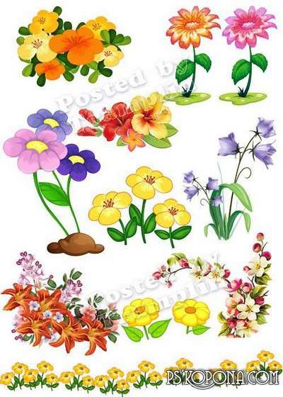 Free images flowers png  – clipart on a transparent background