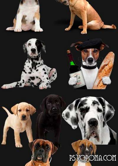 PNG clipart Dogs png images - Free download