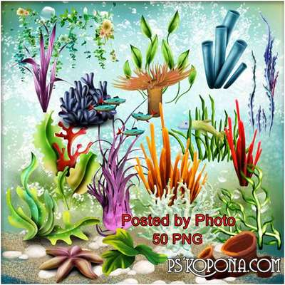 Free png images algae, corals png - clipart on a transparent background - Free download