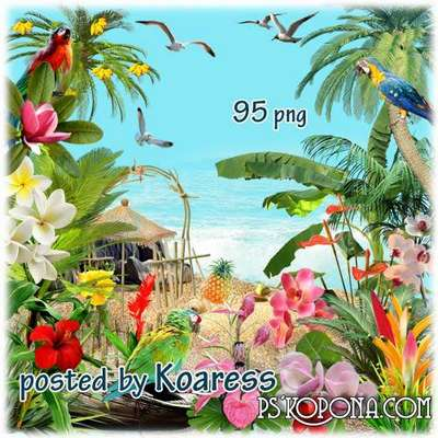 Tropics png images - tropical flowers png, birds, palm trees, sea shells - Free download