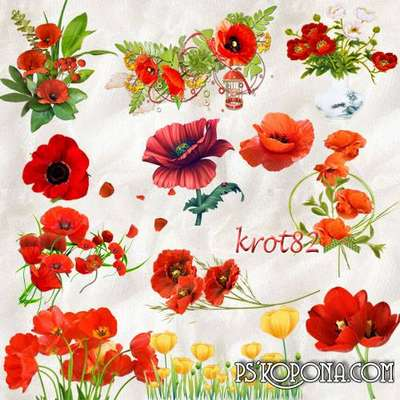 flowers png graphics and clusters - Bouquet of poppies png