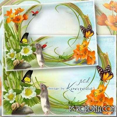 Photo framework with flowers, butterflies, mouse- Serene summer