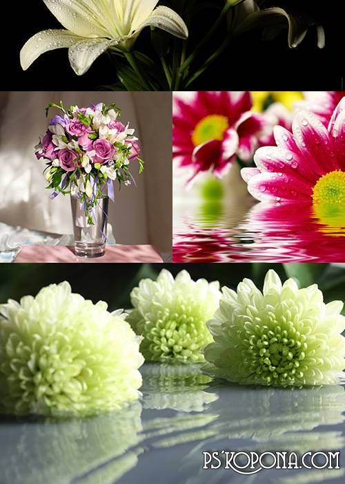 UHQ JPG Backgrounds for design - a variety of flowers