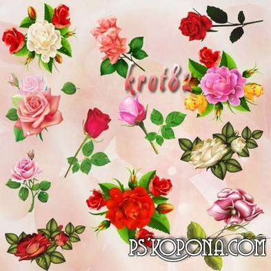 Clipart red, white and yellow roses on transparent background