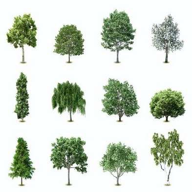 Clipart trees PNG on a transparent background