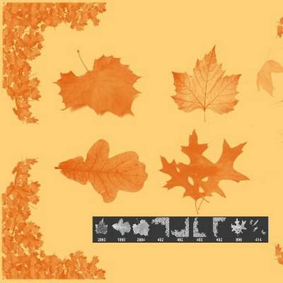 Free Photoshop brushes - Autumn leaves