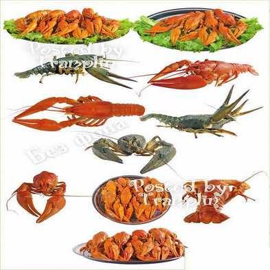free Psd download – River crayfish
