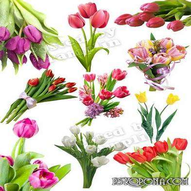 Bouquets tulips png – Spring clipart on a transparent background set 2 - Free Download