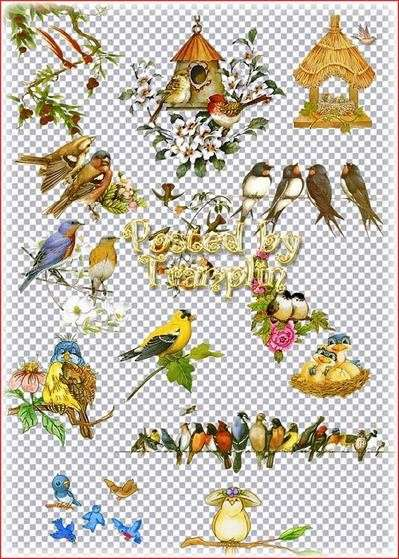 Clipart on a transparent background - Birds