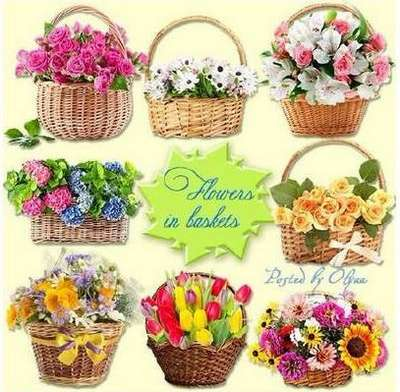 Flowers in baskets - Klipart PNG on a transparent background