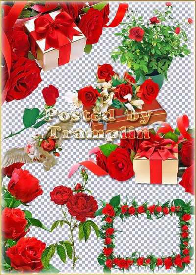 Red roses in gifts with bows on a transparent background download - free 15 png images